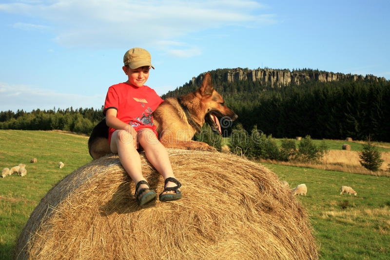 Teenage boy with dog on the meadow stock photo
