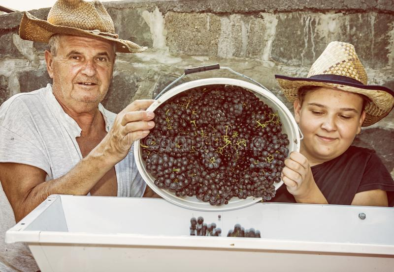 Teenage boy with grandfather strew bunches of grapes, yellow filter royalty free stock image