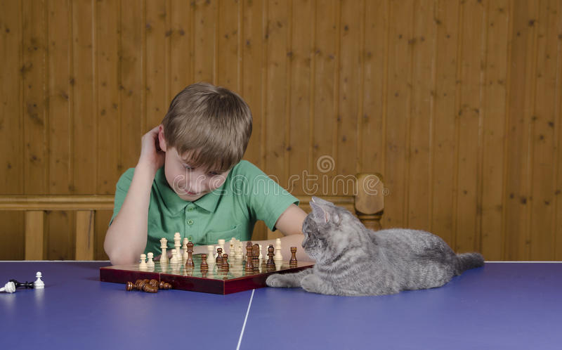 Teenage boy playing chess with a cat on a tennis table royalty free stock image