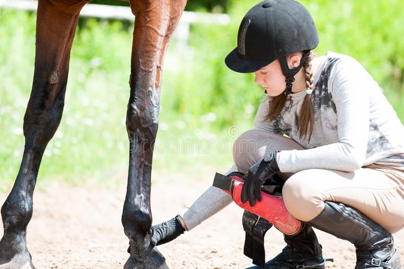 Teenage equestrian girl checking for injury of bay horse leg. Teenage equestrian girl in helmet sitting near her bay horse and checking for leg injury after royalty free stock photos