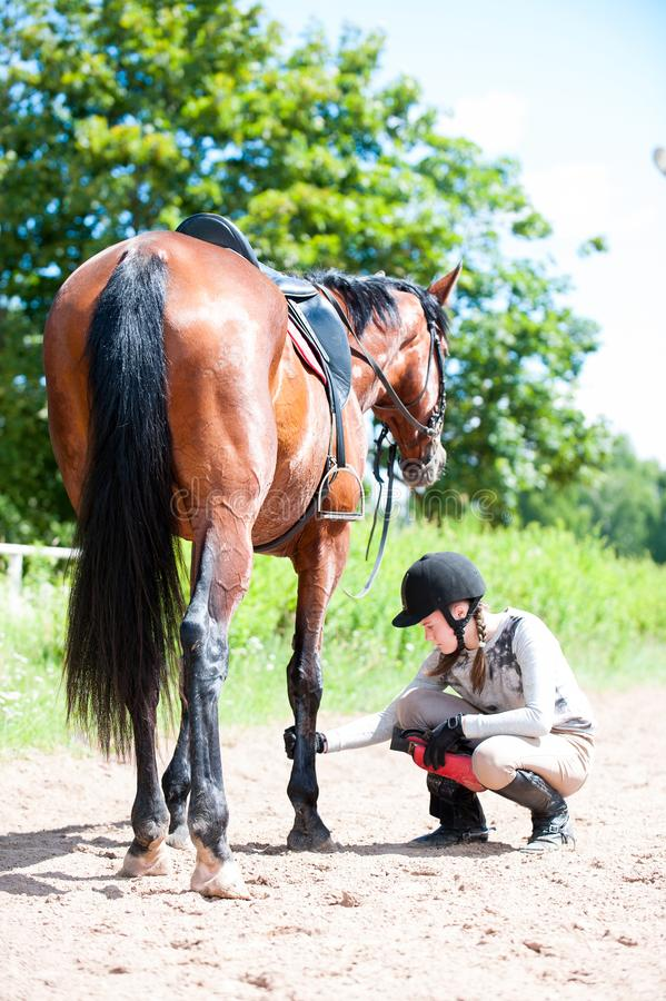 Teenage equestrian girl checking for injury of bay horse leg. Teenage equestrian girl in helmet sitting near her bay horse and checking for leg injury after royalty free stock photography