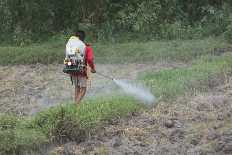 Teenage farmer spraying pesticide without protection. Teenage farmers spray pesticides without protection against harmful effects on health stock images