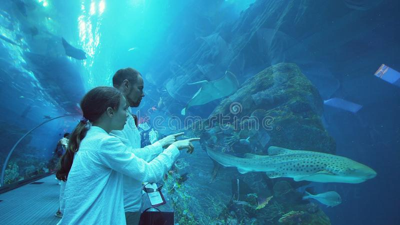 Teenage girl with Dad amusingly watching the fish in Aquarium royalty free stock photography