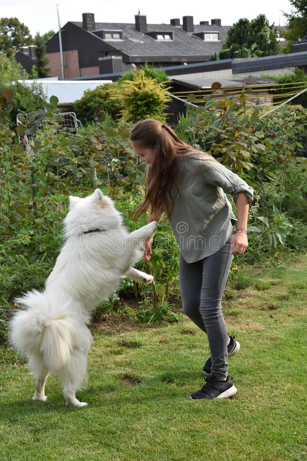 Teenage girl plays with a young  samoyed royalty free stock photo