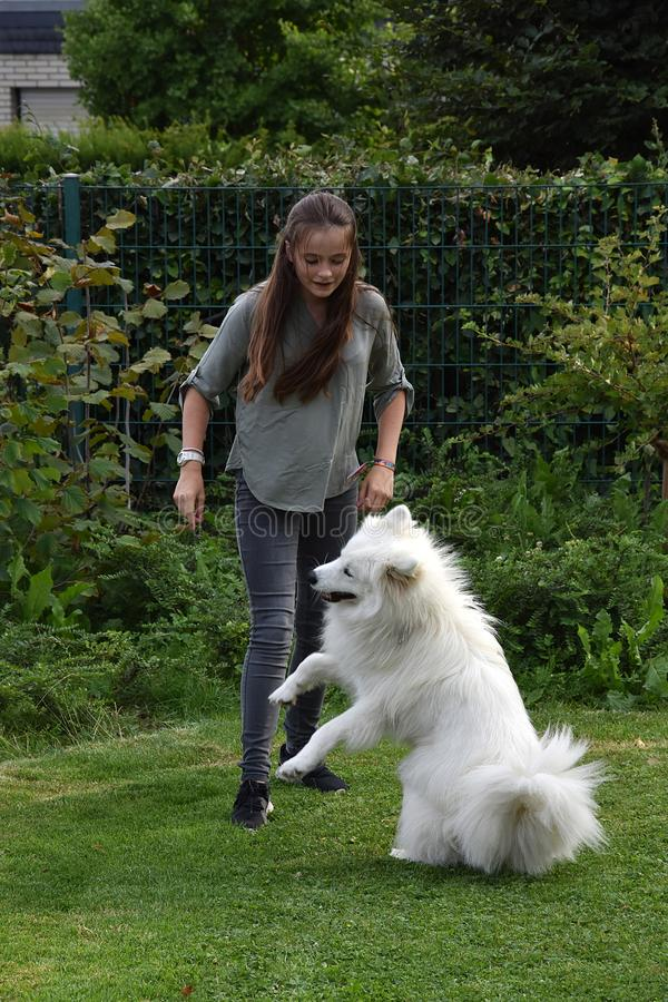 Teenage girl plays with a young  samoyed stock photography