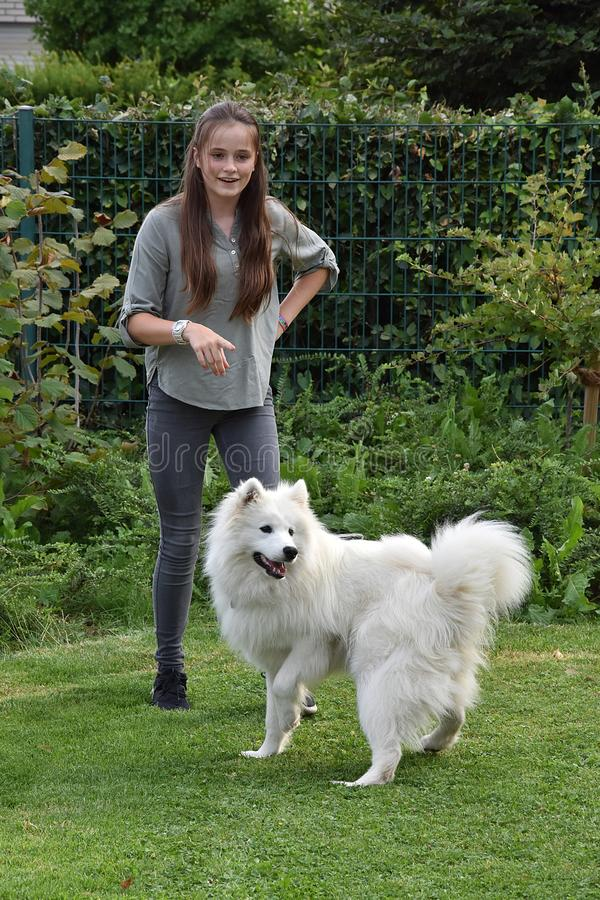 Teenage girl plays with a young  samoyed stock image