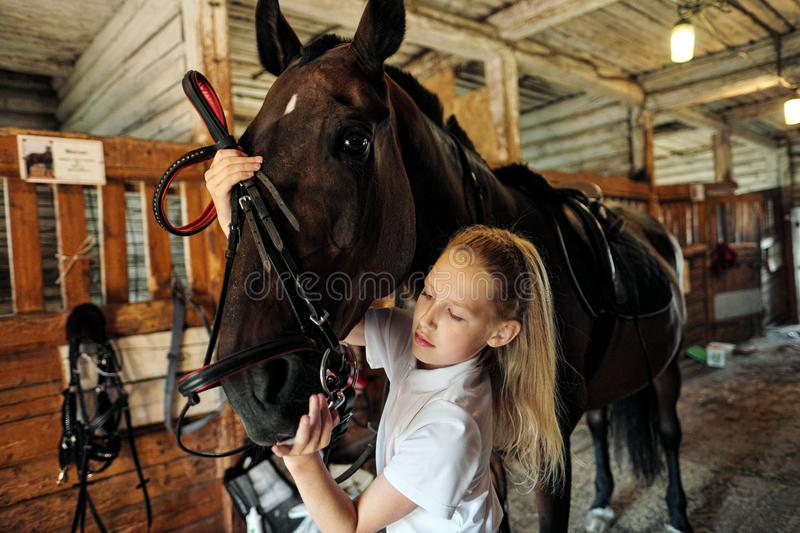 A teenage girl rider saddles a horse and puts a bridle on her. Preparing for horseback riding stock photo