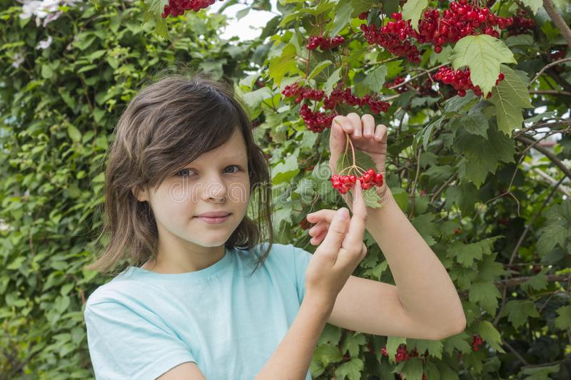 Teenage girl and ripe berries of viburnum on branches among foliage stock image
