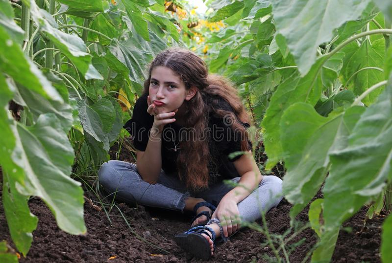 A teenage girl and sunflowers royalty free stock photography