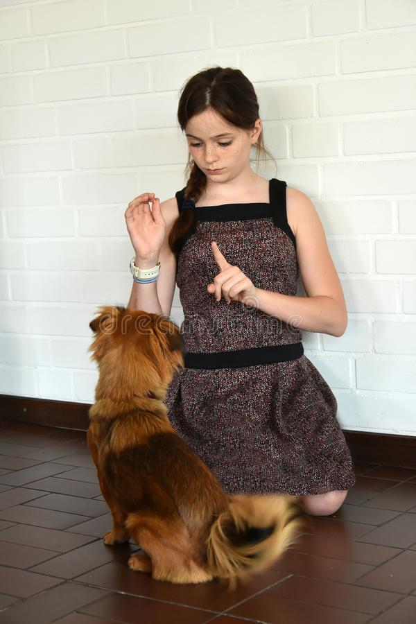 Teenage girl trains her little puppy dog. And gives him a dog treat stock photos