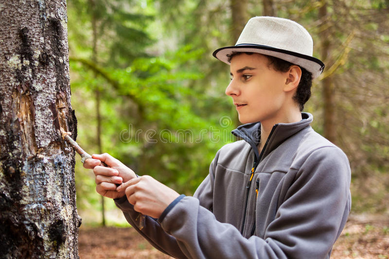 Teenage Kid Collecting Resin Stock Photo