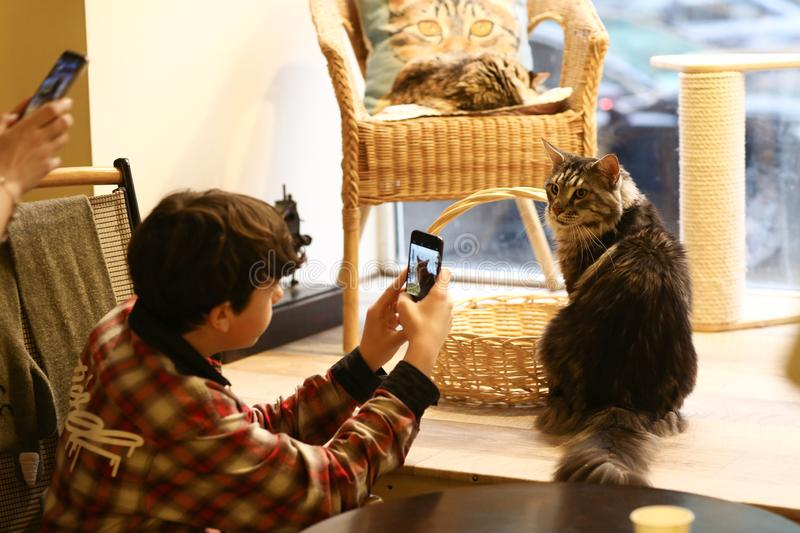 Teenager boy in cat cafe make photo of maine coon cat close up photo royalty free stock images