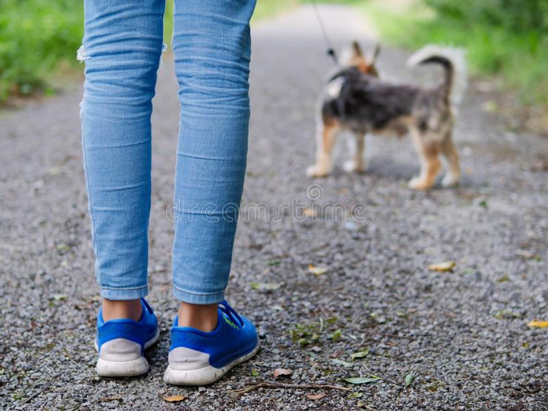 Teenager`s girls legs in focus her small yorkshire terrier dog out of focus. Concept animal care royalty free stock images