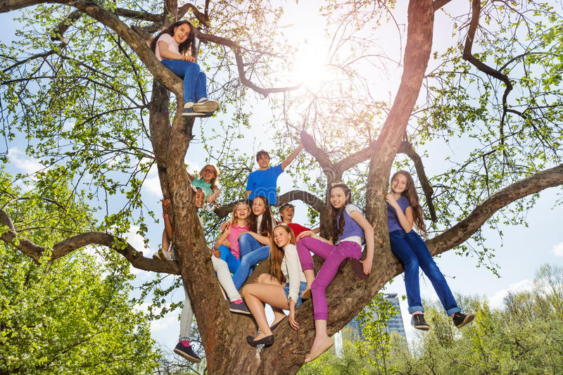 Teenagers sit on tree during beautiful summer day royalty free stock photo