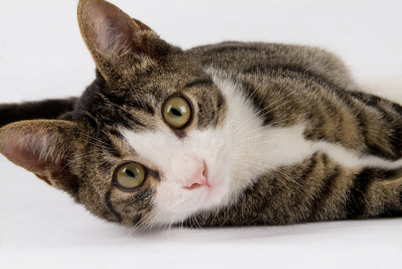 teenege mignon de chat images libres de droits