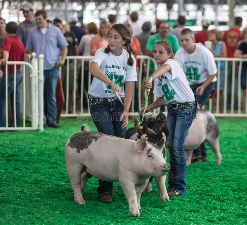 Teens with pigs at Iowa State Fair stock photo