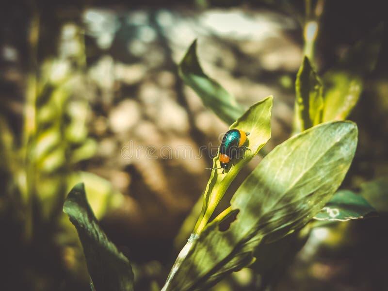 teeny крошечная голубая черепашка красиво shimmers в солнце стоковые изображения