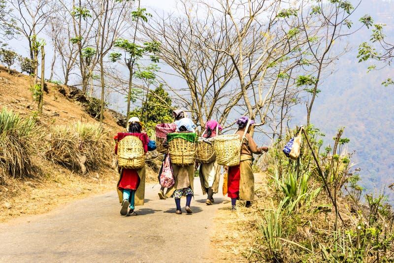 Teepflücker von Darjeeling lizenzfreies stockbild