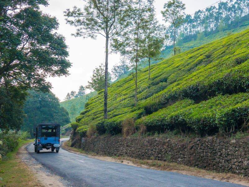 Teeplantagen in Munnar Kerala, Indien lizenzfreies stockfoto