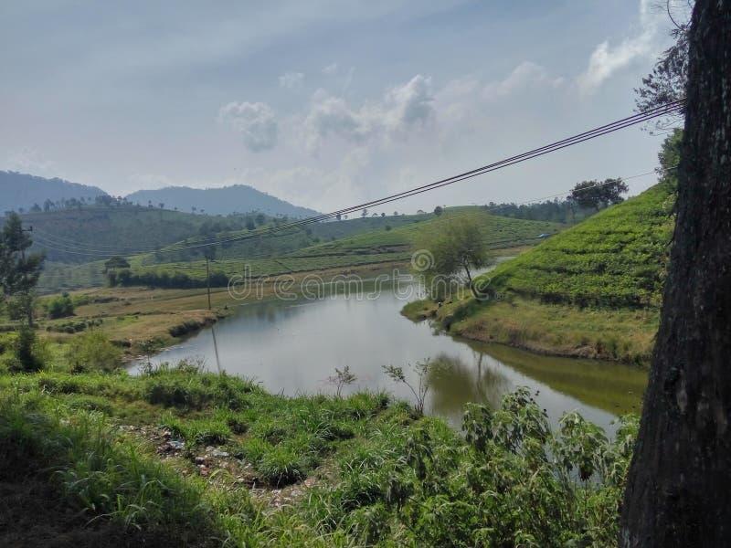 Teeplantagenbereich im Kertasari-Bereich, Bandung, West-Java, Indonesien stockbild