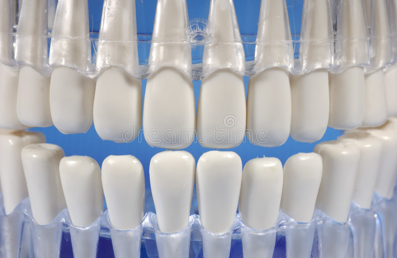 Download Teeth stock photo. Image of molar, oral, body, mouth, periodontal - 473434
