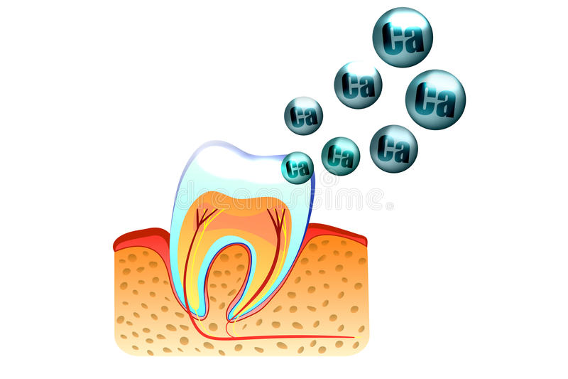Teeth and calcium vector illustration