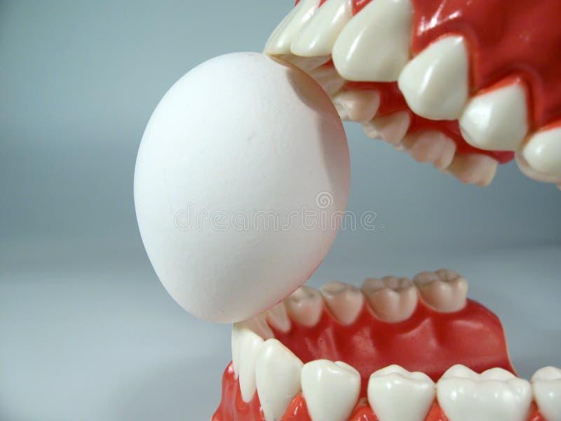 Teeth model. Plastic dental  ,chattering teeth,mold of a full set of human teeth stock images