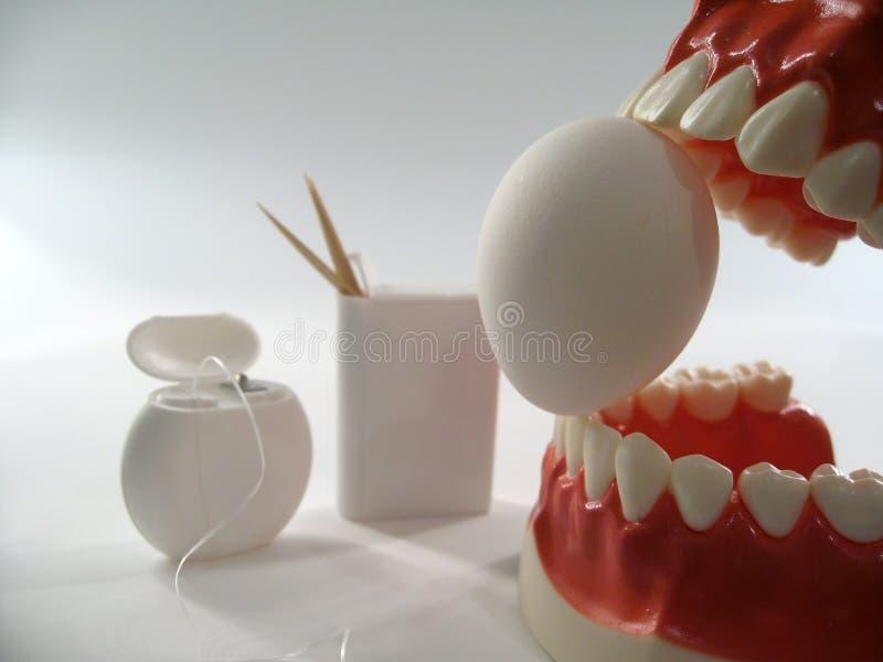 Teeth model. Plastic dental  ,chattering teeth,mold of a full set of human teeth royalty free stock photography