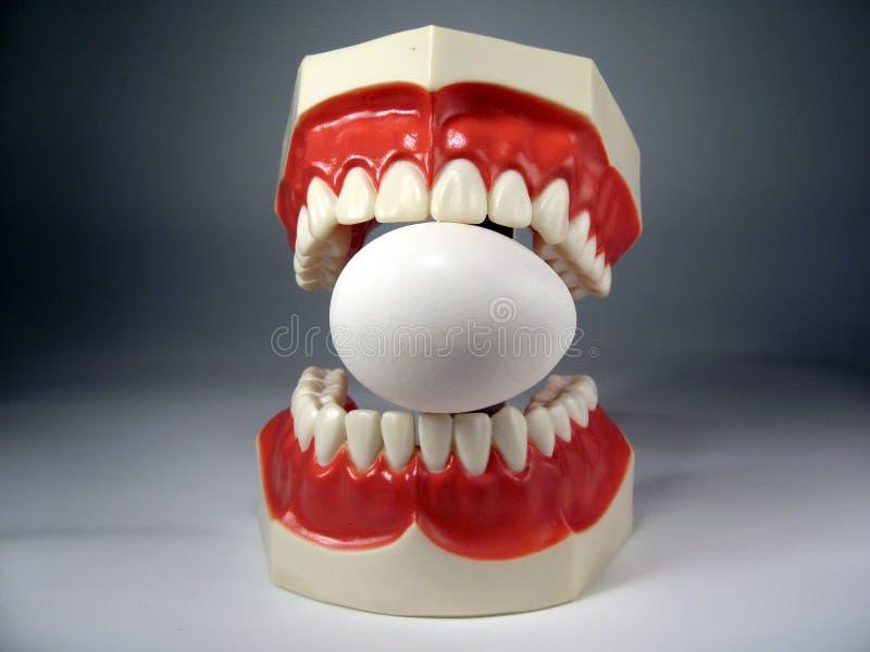 Teeth model. Plastic dental teeth model and Egg royalty free stock photo