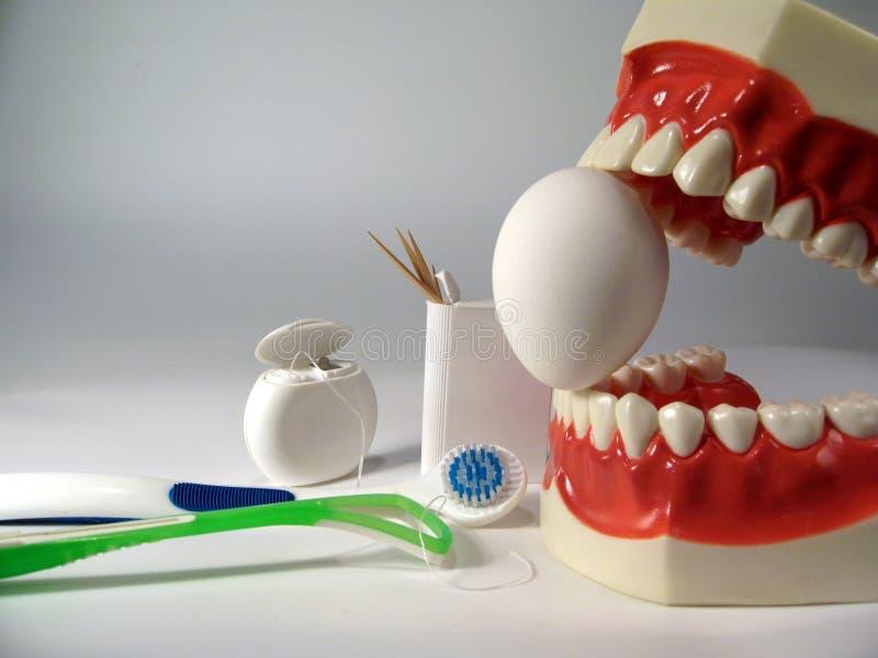 Teeth model. Plastic dental teeth model and Egg royalty free stock photos