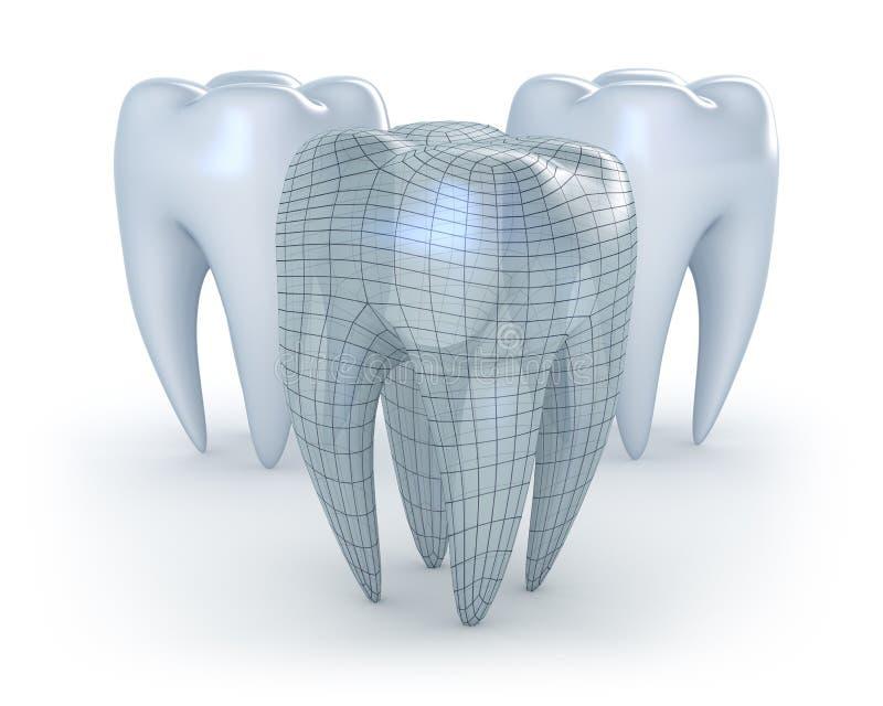 Teeth on white background vector illustration