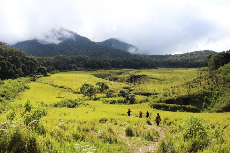 Tegal Panjang fotografia stock libera da diritti