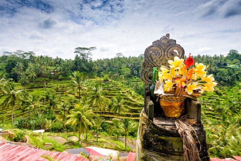 Tegalalang米大阳台,巴厘岛 图库摄影