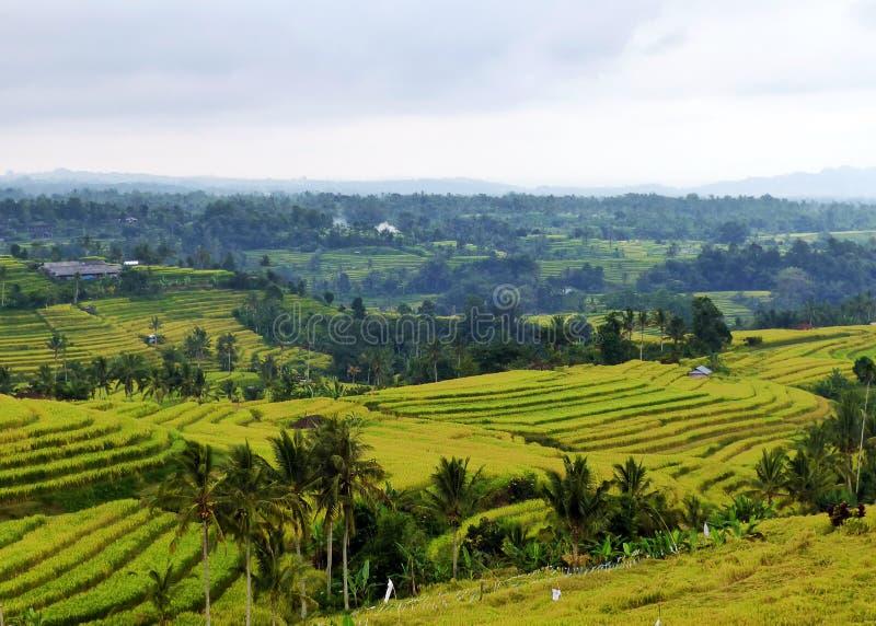 Tegalalang ryż tarasy obrazy stock