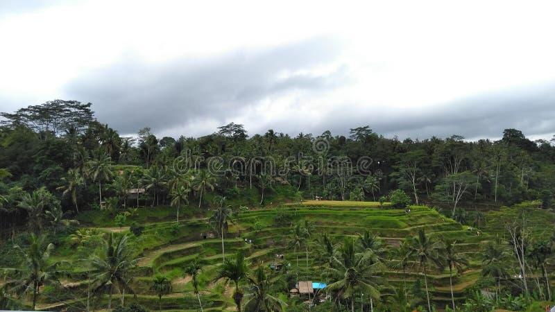 TEGALALANG, UBUD, GIANYAR, PAESAGGIO INDONESIA DI BALI immagini stock libere da diritti