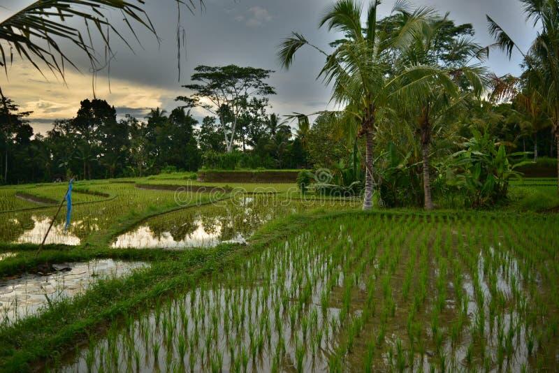 Tegallalang é um vale com o melhor terraço do arroz de bali imagens de stock