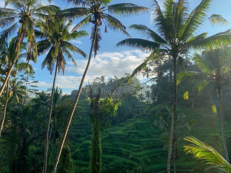 Tegallalang Rice Terrace foto de stock