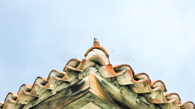 Tegelplattatak med fågeln royaltyfria bilder