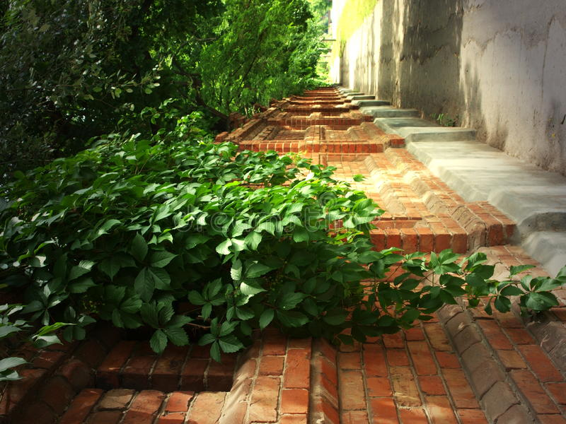 tegelstenmurgrönaen låter vara den gammala stenväggen fotografering för bildbyråer