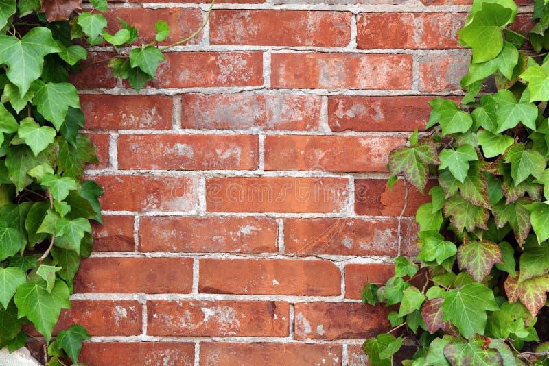 tegelstenmurgrönavägg arkivbild