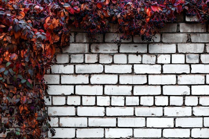Tegelstenvägg med abstrakt bakgrund för dekorativa druvor royaltyfri foto