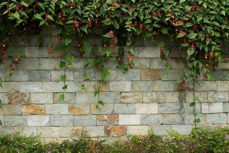 Tegelstenvägg med blommor upptill och botten arkivbild