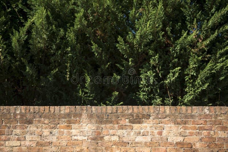 Tegelstenvägg med trädet royaltyfri bild