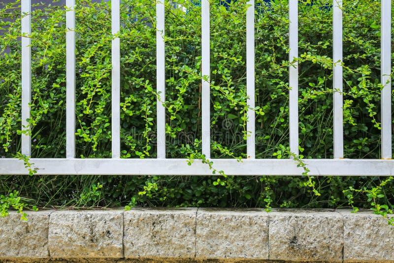 Download Tegelstenvägg Och Gräsplanblad Fotografering för Bildbyråer - Bild av natur, modell: 76703143