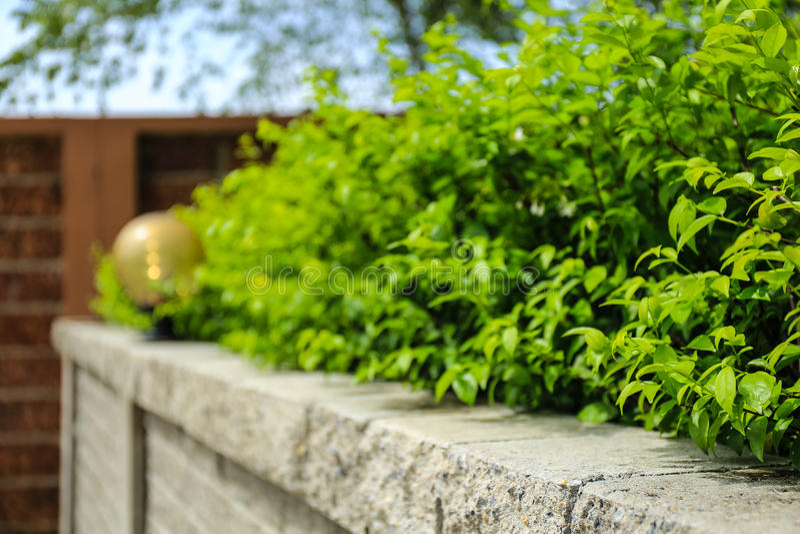 Download Tegelstenvägg Och Gräsplanblad Fotografering för Bildbyråer - Bild av säsong, blomma: 76703301