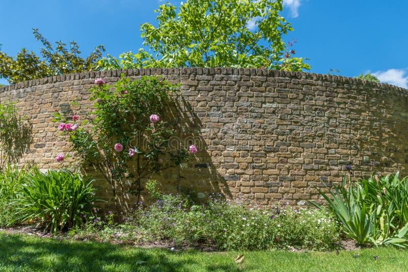Tegelstenvägg och rosor royaltyfri fotografi