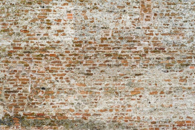 Tegelstenväggen texturerar för bakgrund royaltyfri foto