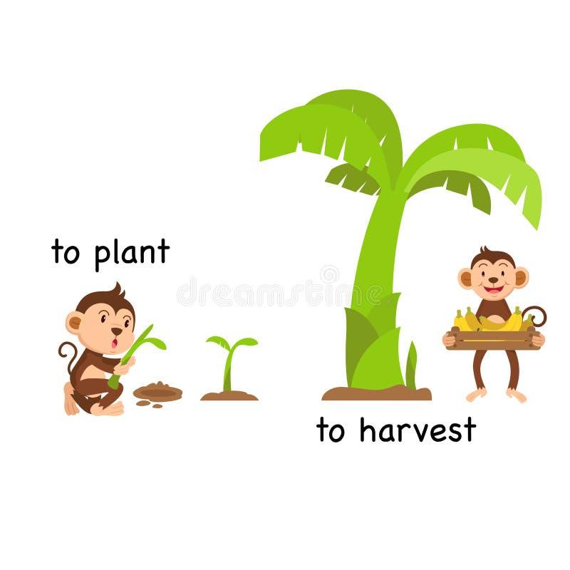 Tegengesteld aan installatie en aan oogst vector illustratie