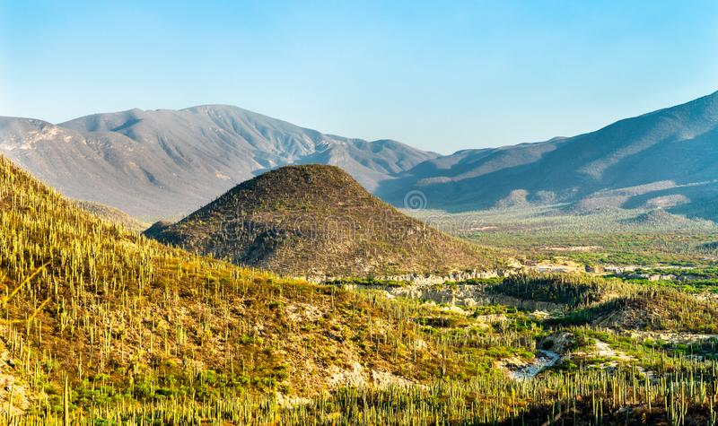 Tehuacan-Cuicatlan Biosphere Reserve in Mexico. Tehuacan-Cuicatlan Biosphere Reserve. UNESCO world heritage in Mexico stock photo