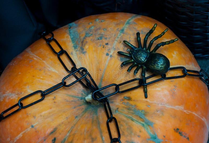 Teia de aranha de Dia das Bruxas fotos de stock royalty free
